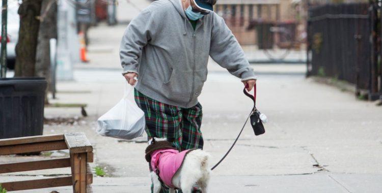 ¿Qué hacer en caso de mordeduras de perro?