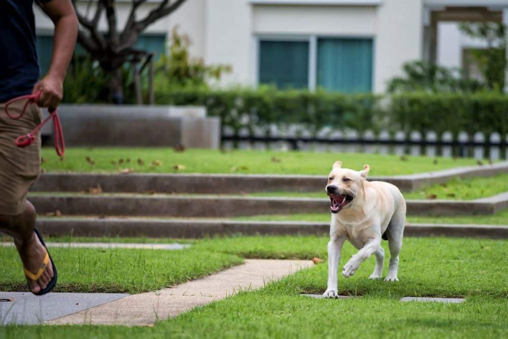 Cómo Puede Proceder por una Mordedura de Perro