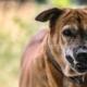 Identifique si Tiene un Caso Legal de Lesiones por Mordedura de Perro