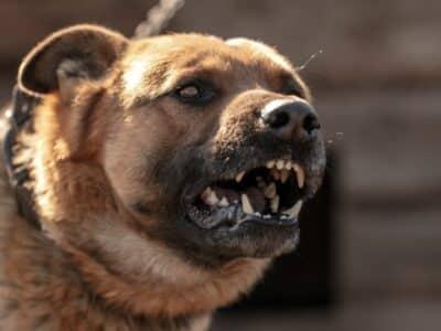 ¿Cómo Puede Evitar una Demanda por Mordedura de Perro?