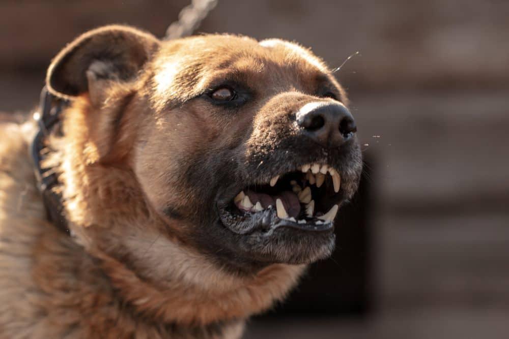 Conozca Como Puede Evitar una Demanda por Mordedura de Perro