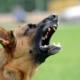 ¿Cómo Funciona una Compensación por Mordedura de Perro?