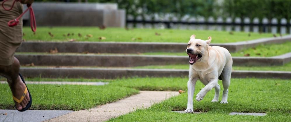 Abogados de mordeduras de perro