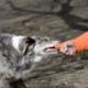 Cómo obtener una compensación por mordedura de perro en Chicago