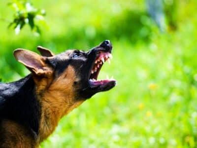 ¿Cómo Debe Actuar Ante una Mordedura de Perro?