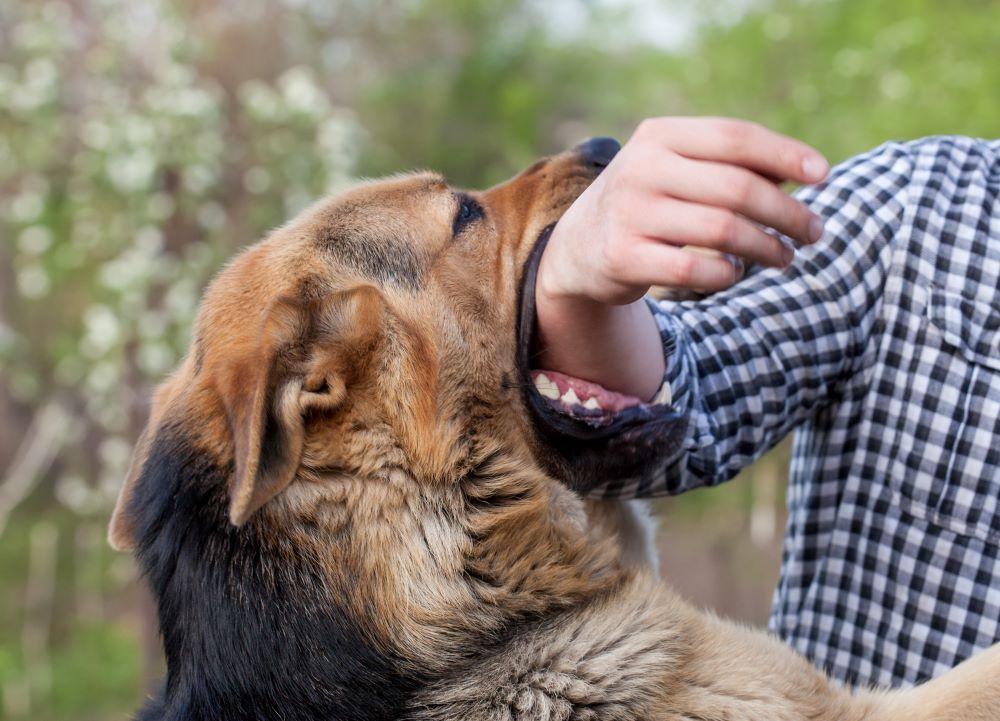 ¿Qué Hace un Abogado para Mordeduras de Perro?